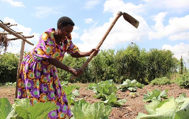 Agnes planting