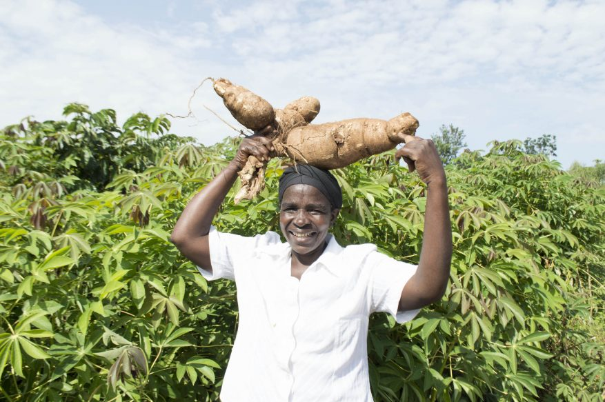 Farmer Damaris with cassava on her head