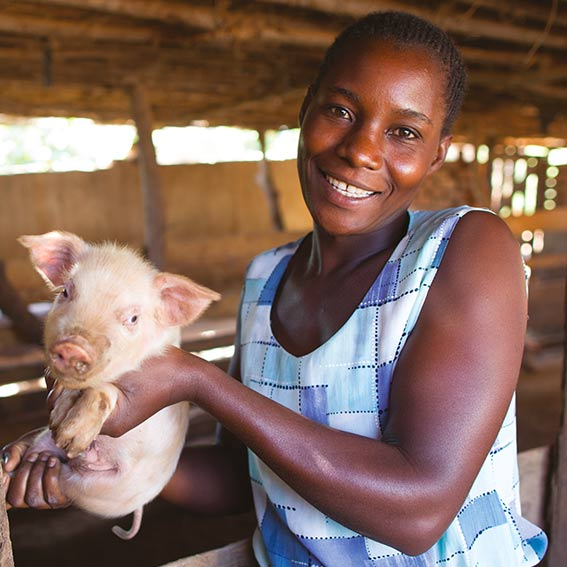SHA Gift of Hope Piglet