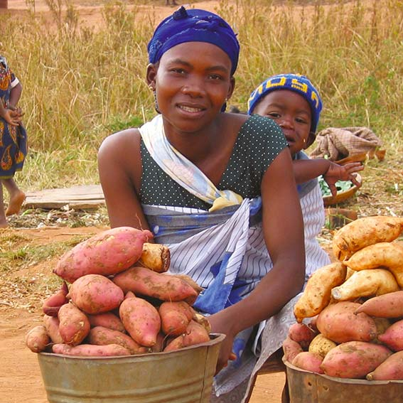 SHA Gift of Hope Sweet Potatoes
